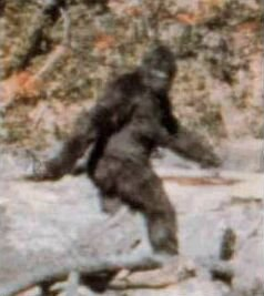 A bigfoot